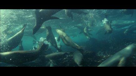 Le Grand Bleu – Version longue - Blu-Ray